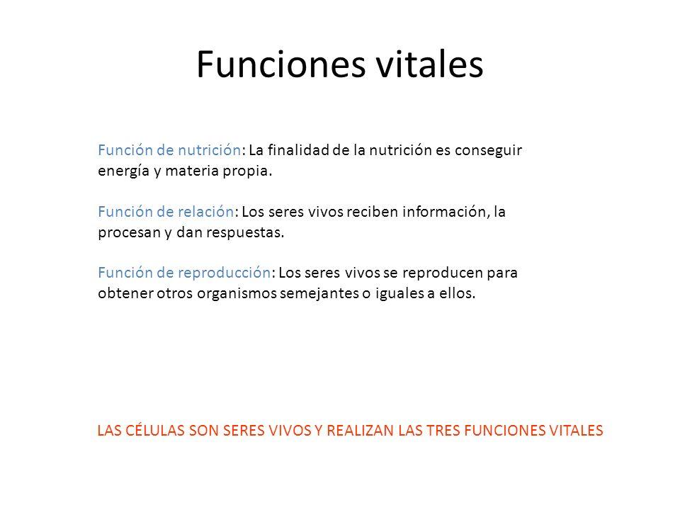 Funciones vitales Función de nutrición: La finalidad de la nutrición es conseguir energía y materia propia. Función de relación: Los seres vivos recib