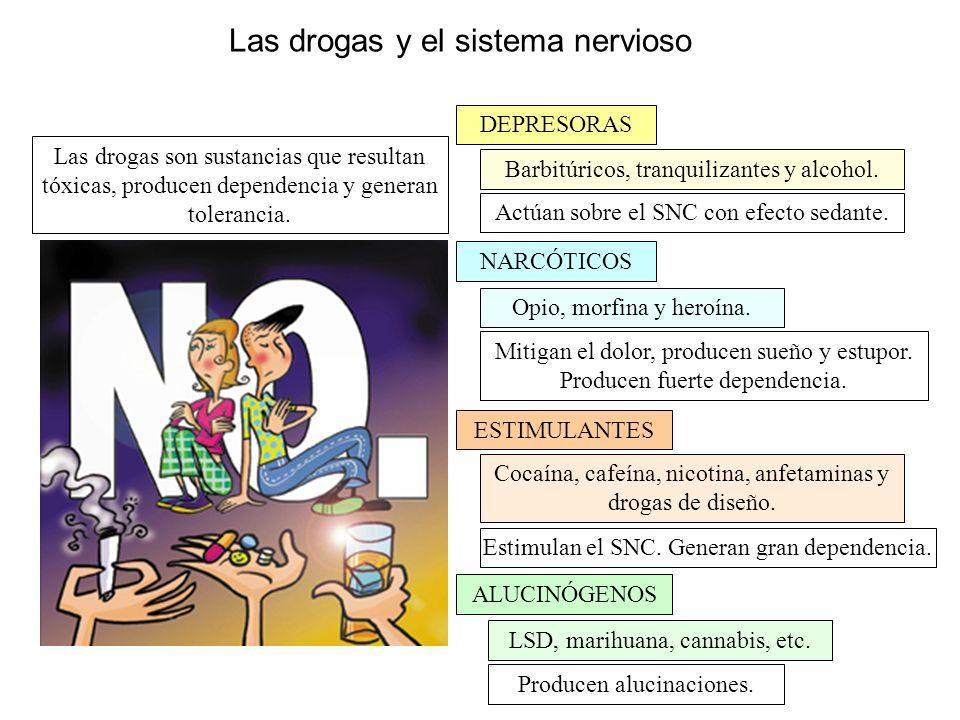 Las drogas y el sistema nervioso Las drogas son sustancias que resultan tóxicas, producen dependencia y generan tolerancia. DEPRESORAS ESTIMULANTES NA