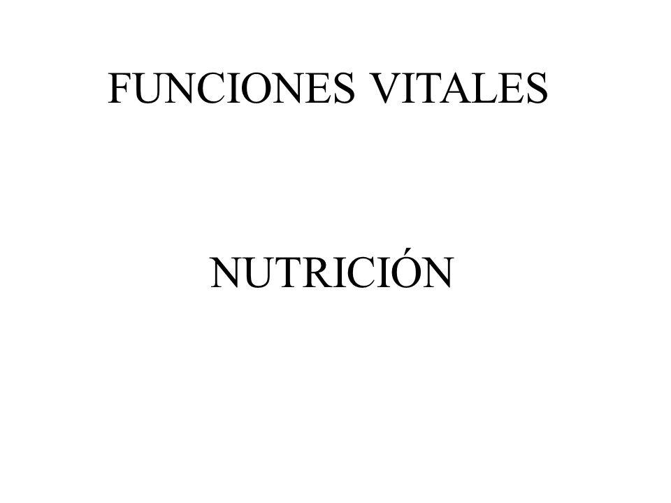 La nutrición es una función que comprende la ingestión de alimentos o nutrientes y su posterior utilización por el organismo con el fin de proporcionarle la energía y las sustancias necesarias para su desarrollo.