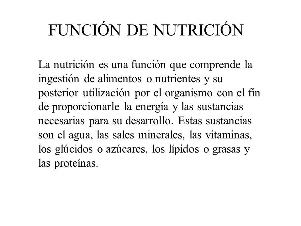 La nutrición es una función que comprende la ingestión de alimentos o nutrientes y su posterior utilización por el organismo con el fin de proporciona