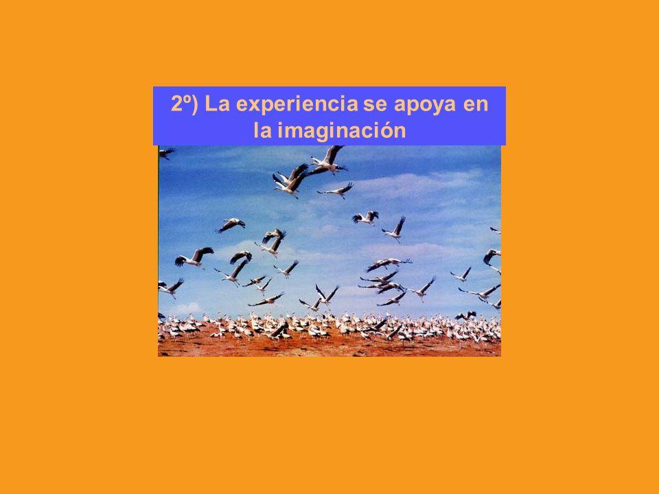 2º) La experiencia se apoya en la imaginación