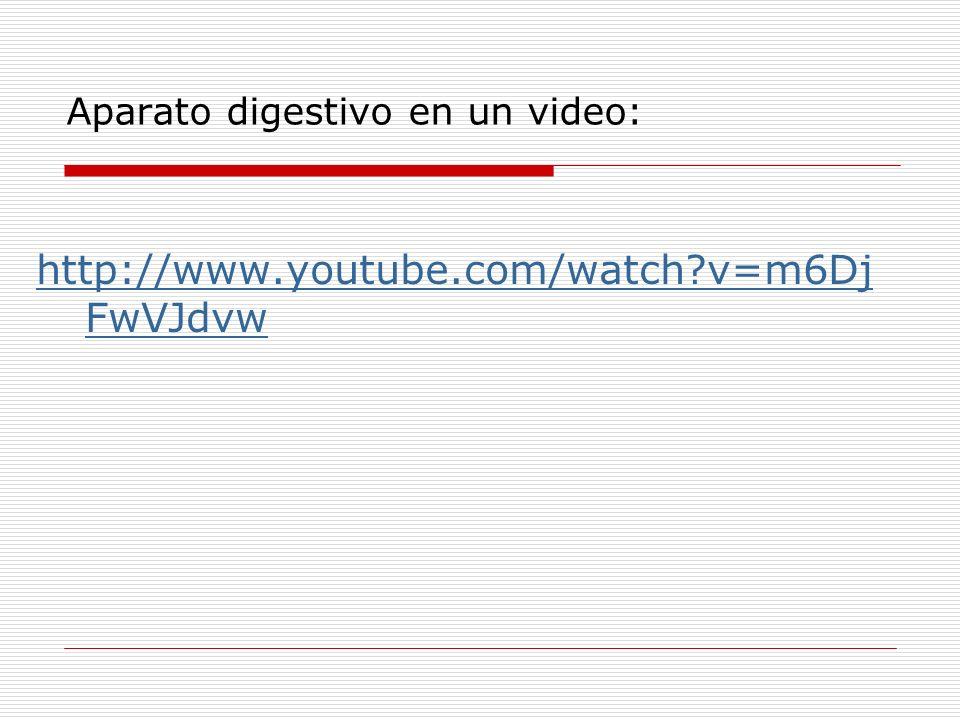 Aparato digestivo en un video: http://www.youtube.com/watch?v=m6Dj FwVJdvw