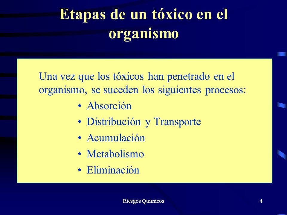 Riesgos Químicos4 Etapas de un tóxico en el organismo Una vez que los tóxicos han penetrado en el organismo, se suceden los siguientes procesos: Absor