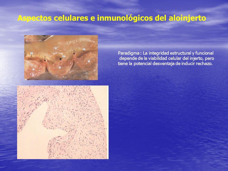 Aspectos celulares e inmunológicos del aloinjerto Paradigma : La integridad estructural y funcional depende de la viabilidad celular del injerto, pero