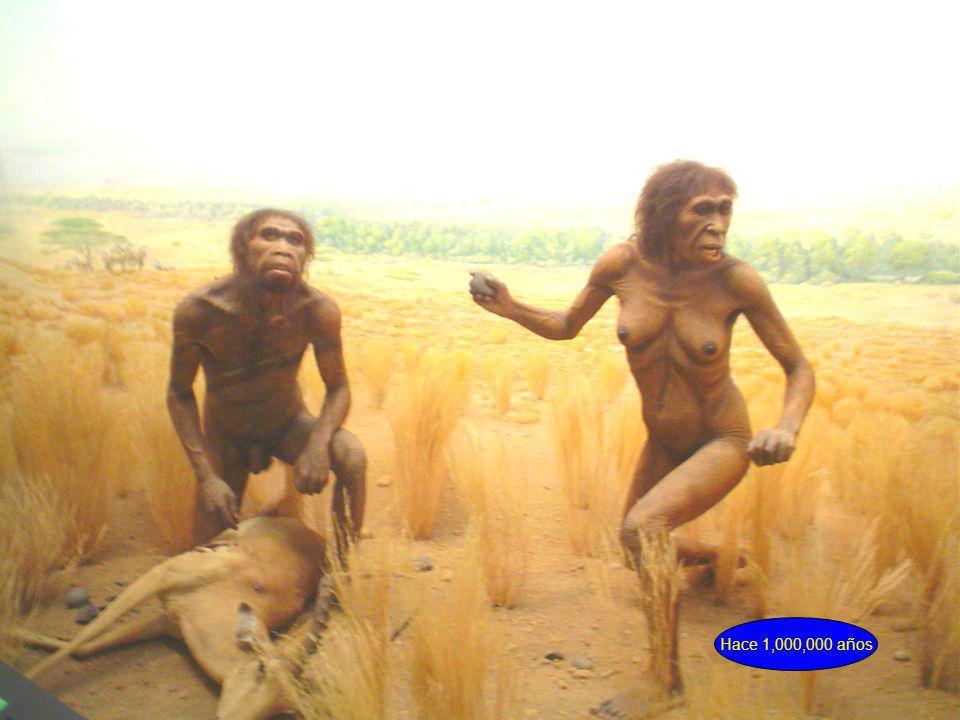 Hace 1,000,000 años