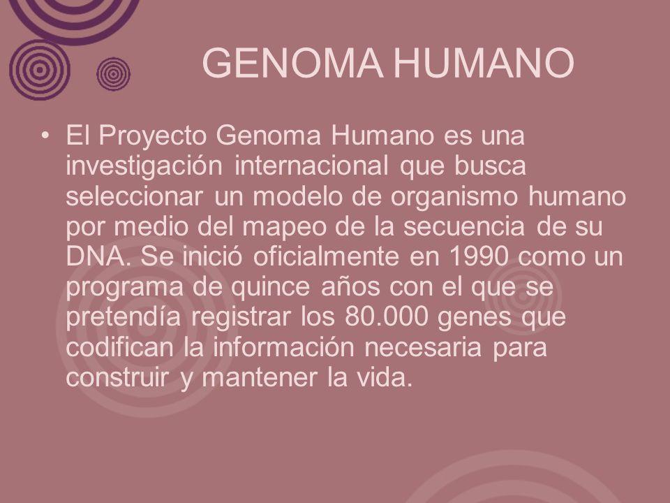 GENOMA HUMANO El Proyecto Genoma Humano es una investigación internacional que busca seleccionar un modelo de organismo humano por medio del mapeo de