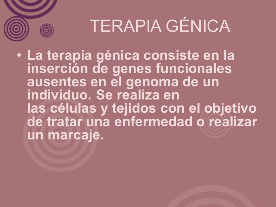TERAPIA GÉNICA La terapia génica consiste en la inserción de genes funcionales ausentes en el genoma de un individuo. Se realiza en las células y teji