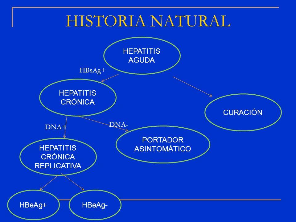 HEPATITIS AGUDA CURACIÓN HEPATITIS CRÓNICA PORTADOR ASINTOMÁTICO HEPATITIS CRÓNICA REPLICATIVA HBeAg+HBeAg- DNA- DNA+ HBsAg+