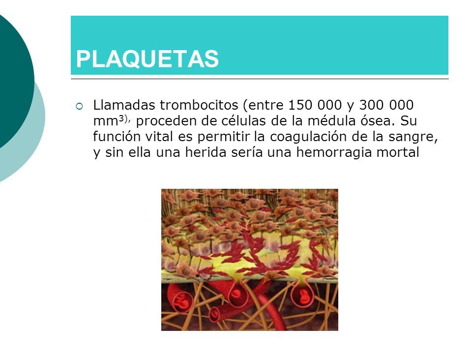 PLAQUETAS Llamadas trombocitos (entre 150 000 y 300 000 mm 3), proceden de células de la médula ósea. Su función vital es permitir la coagulación de l