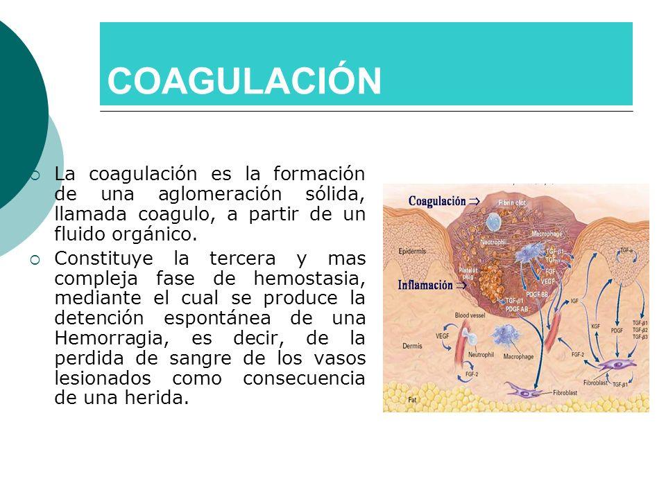 COAGULACIÓN La coagulación es la formación de una aglomeración sólida, llamada coagulo, a partir de un fluido orgánico. Constituye la tercera y mas co