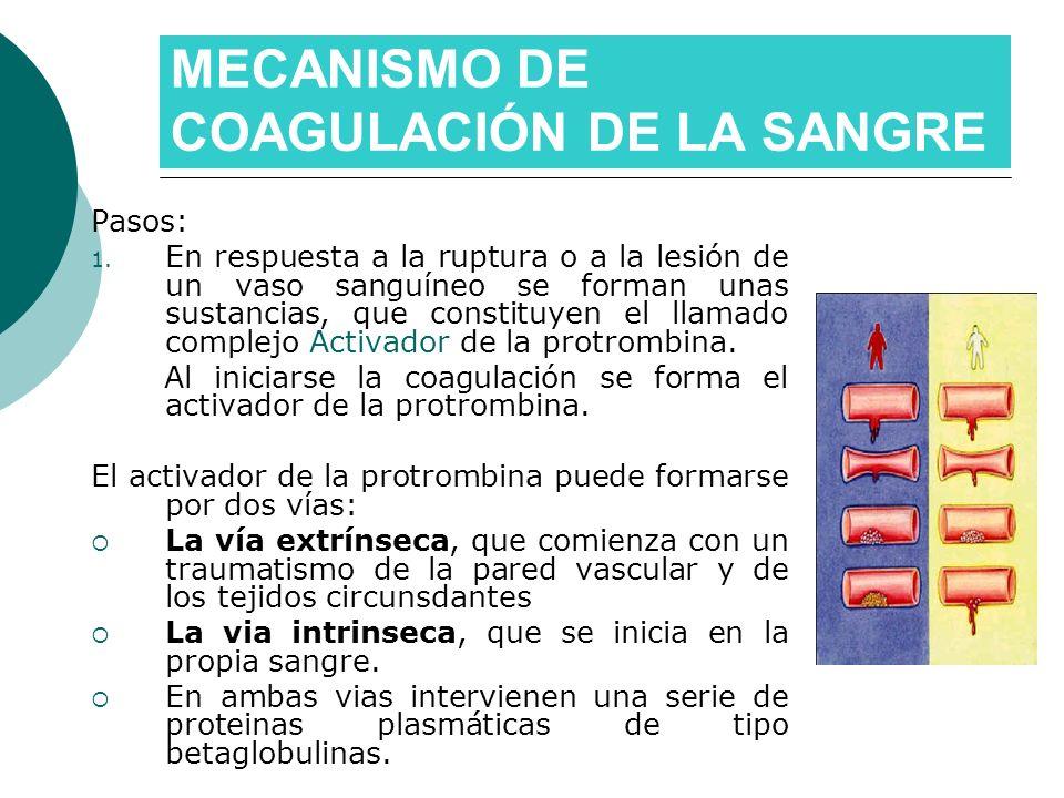 Pasos: 1. En respuesta a la ruptura o a la lesión de un vaso sanguíneo se forman unas sustancias, que constituyen el llamado complejo Activador de la