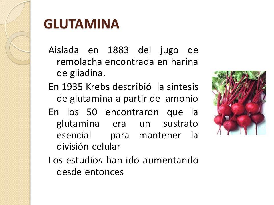 GLUTAMINA Aislada en 1883 del jugo de remolacha encontrada en harina de gliadina. En 1935 Krebs describió la síntesis de glutamina a partir de amonio