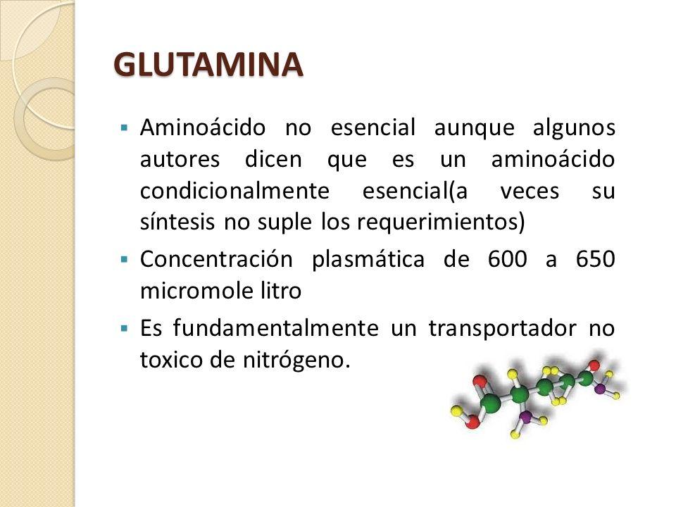 GLUTAMINA Aminoácido no esencial aunque algunos autores dicen que es un aminoácido condicionalmente esencial(a veces su síntesis no suple los requerim