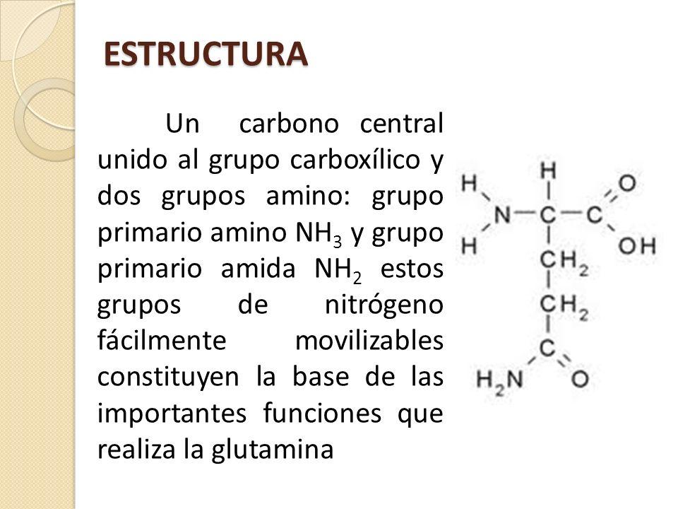 ESTRUCTURA Un carbono central unido al grupo carboxílico y dos grupos amino: grupo primario amino NH 3 y grupo primario amida NH 2 estos grupos de nit