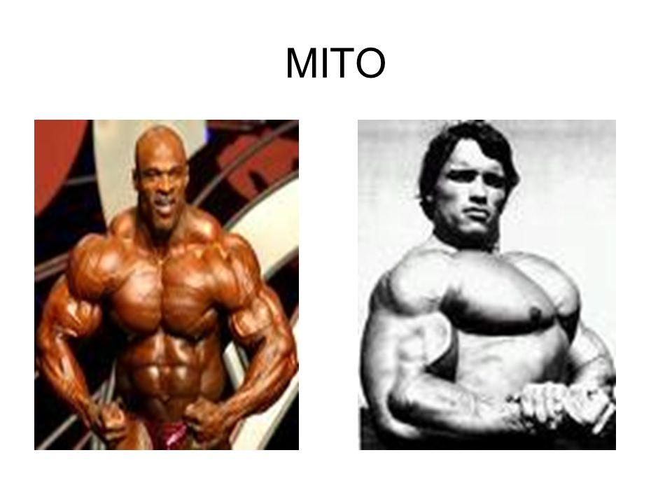 VEGANO ESTRICTO Entonces el uso excesivo de proteína en el deporte es un mito queman en las células para producir energía (un combustible muy caro cuya función no es exactamente esa
