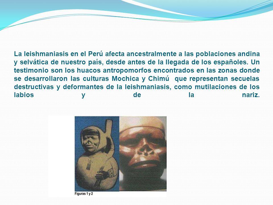 La leishmaniasis en el Perú afecta ancestralmente a las poblaciones andina y selvática de nuestro país, desde antes de la llegada de los españoles. Un