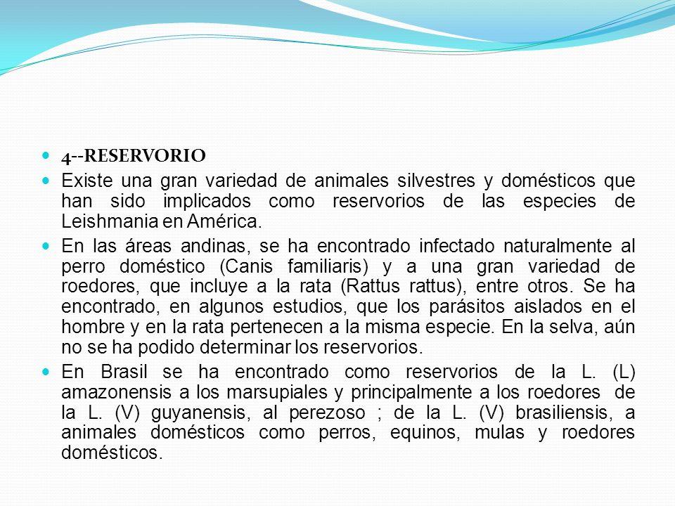 4--RESERVORIO Existe una gran variedad de animales silvestres y domésticos que han sido implicados como reservorios de las especies de Leishmania en A