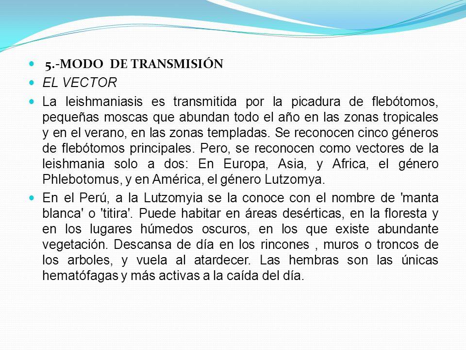5.-MODO DE TRANSMISIÓN EL VECTOR La leishmaniasis es transmitida por la picadura de flebótomos, pequeñas moscas que abundan todo el año en las zonas t