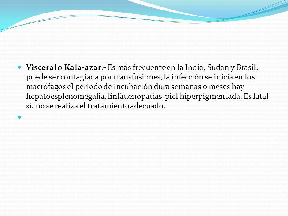 Visceral o Kala-azar.- Es más frecuente en la India, Sudan y Brasil, puede ser contagiada por transfusiones, la infección se inicia en los macrófagos