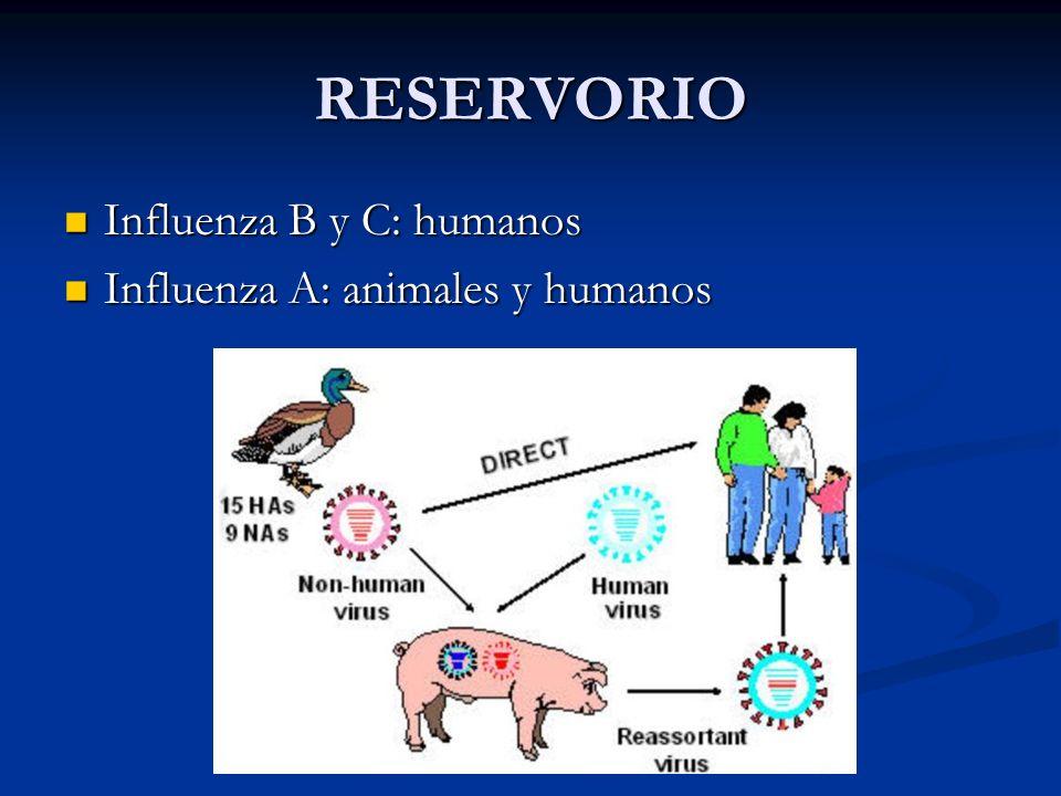 RESERVORIO Influenza B y C: humanos Influenza B y C: humanos Influenza A: animales y humanos Influenza A: animales y humanos