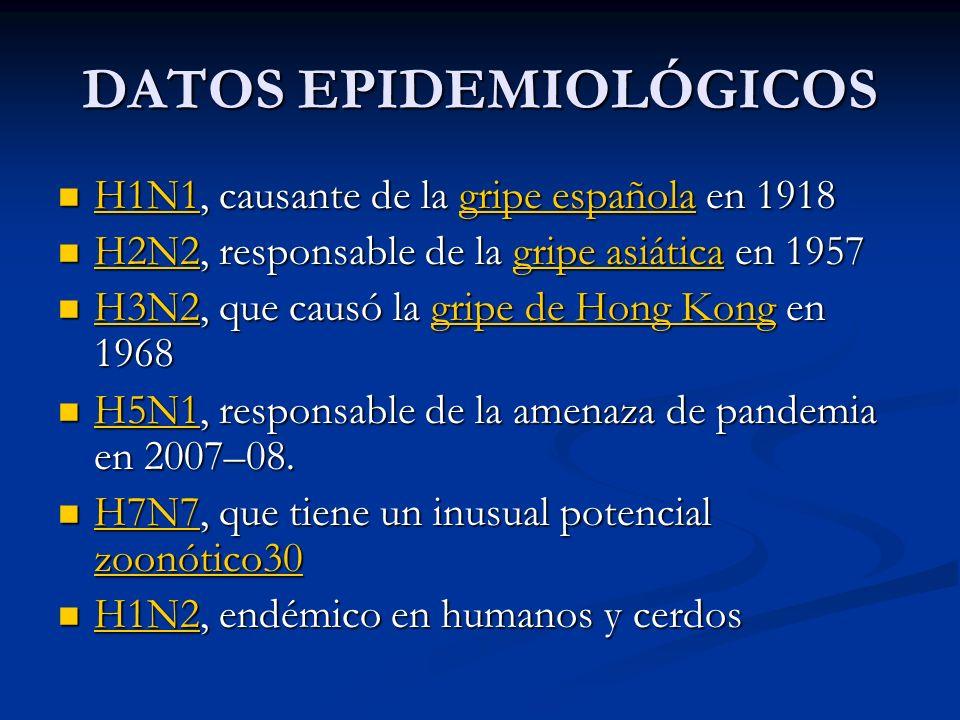 DATOS EPIDEMIOLÓGICOS H1N1, causante de la gripe española en 1918 H1N1, causante de la gripe española en 1918 H1N1gripe española H1N1gripe española H2