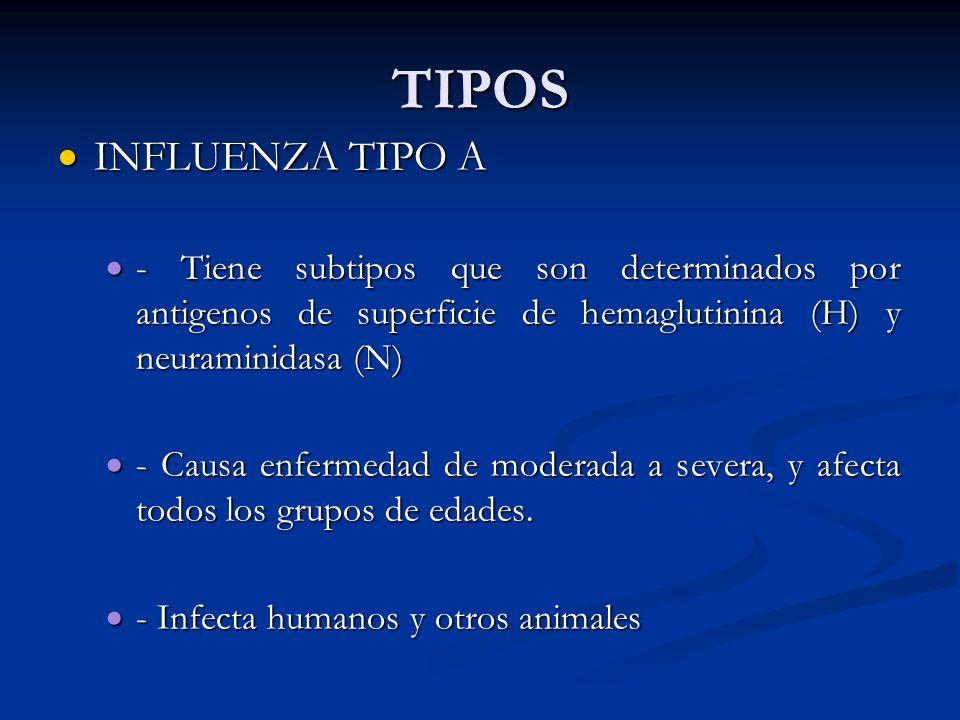 TIPOS INFLUENZA TIPO A INFLUENZA TIPO A - Tiene subtipos que son determinados por antigenos de superficie de hemaglutinina (H) y neuraminidasa (N) - T