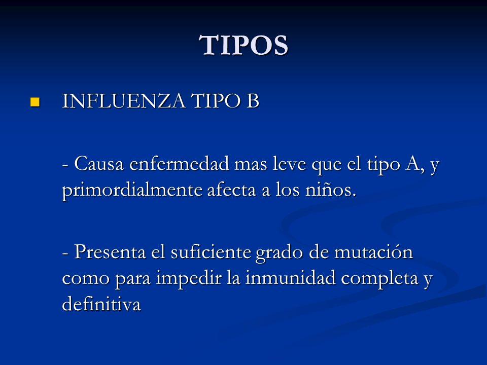 TIPOS INFLUENZA TIPO B INFLUENZA TIPO B - Causa enfermedad mas leve que el tipo A, y primordialmente afecta a los niños. - Presenta el suficiente grad