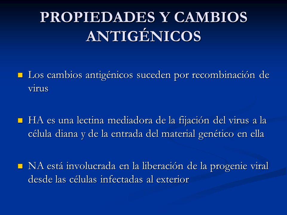 PROPIEDADES Y CAMBIOS ANTIGÉNICOS Los cambios antigénicos suceden por recombinación de virus Los cambios antigénicos suceden por recombinación de viru