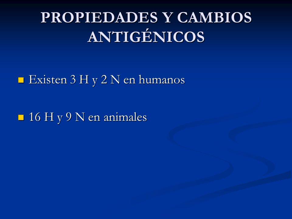 PROPIEDADES Y CAMBIOS ANTIGÉNICOS Existen 3 H y 2 N en humanos Existen 3 H y 2 N en humanos 16 H y 9 N en animales 16 H y 9 N en animales