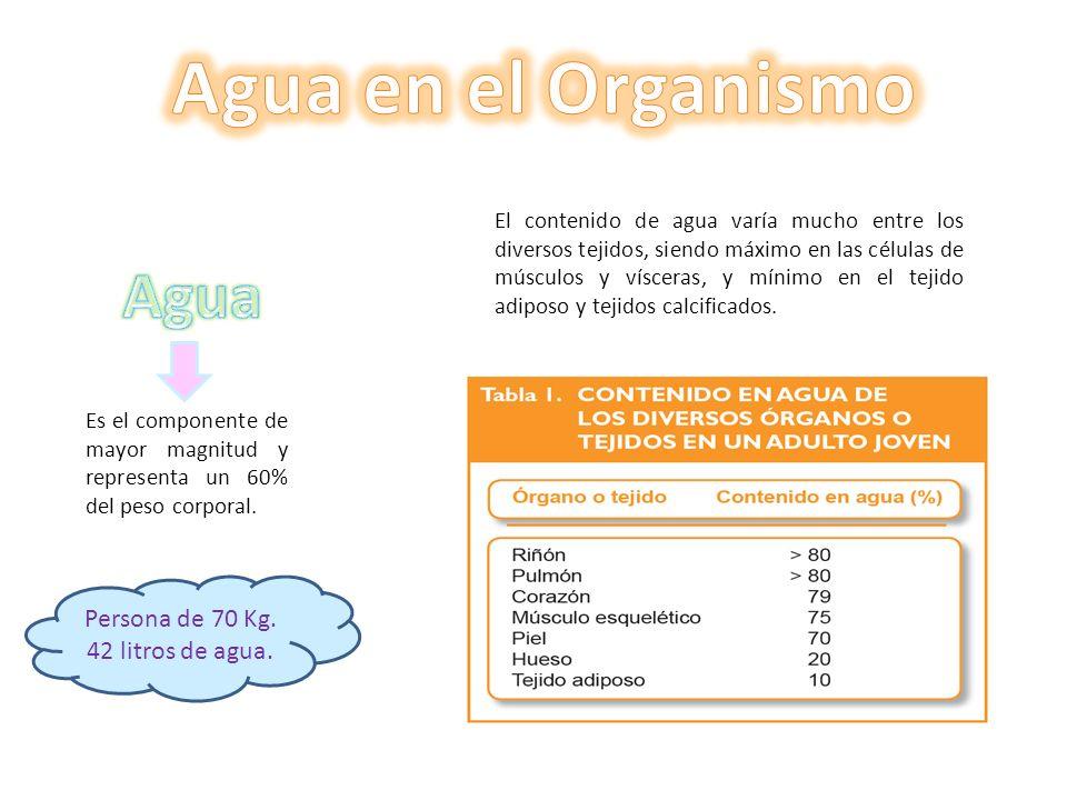 Aparición de sed Cuando se pierde entre el 1% y el 2% del peso corporal Disminución del volumen sanguíneo.