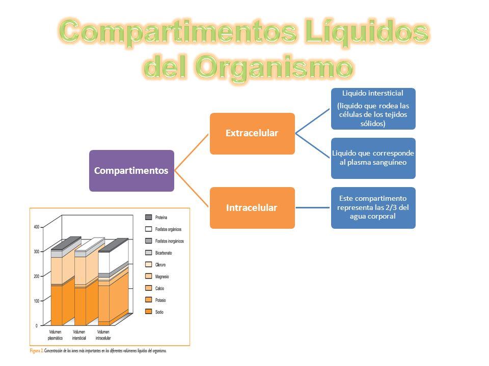 CompartimentosExtracelular Liquido intersticial (liquido que rodea las células de los tejidos sólidos) Liquido que corresponde al plasma sanguíneo Int