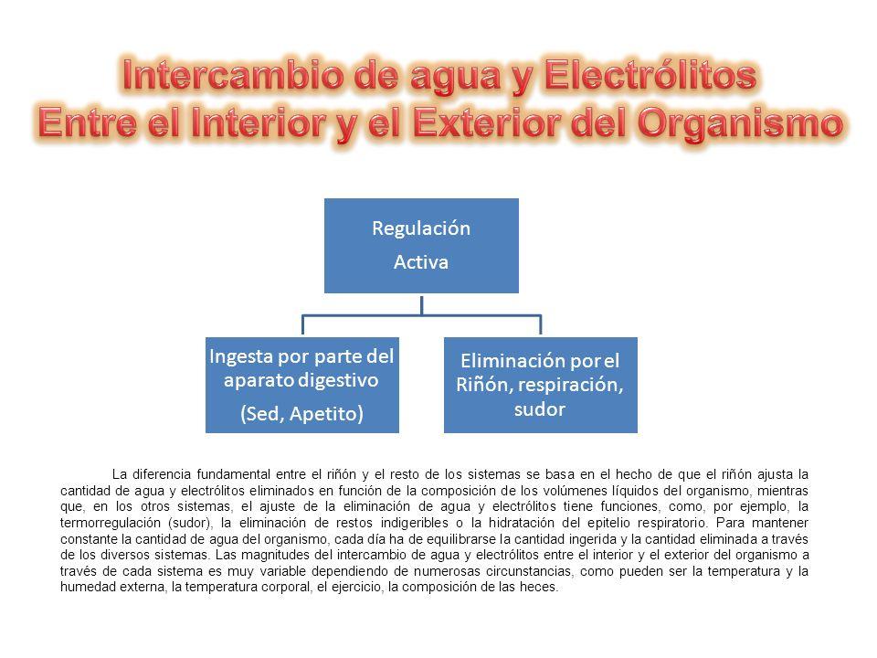La diferencia fundamental entre el riñón y el resto de los sistemas se basa en el hecho de que el riñón ajusta la cantidad de agua y electrólitos elim