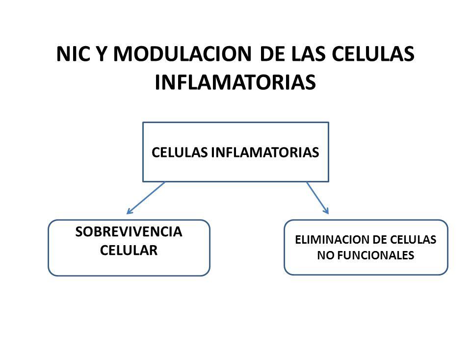 NIC Y MODULACION DE LAS CELULAS INFLAMATORIAS CELULAS INFLAMATORIAS SOBREVIVENCIA CELULAR ELIMINACION DE CELULAS NO FUNCIONALES