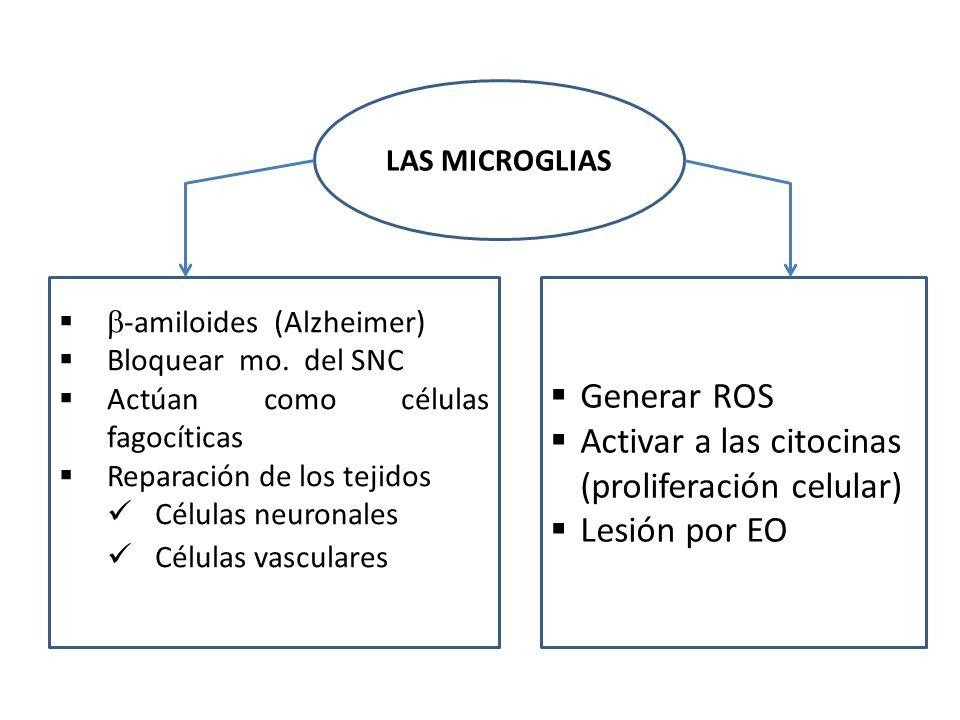 LAS MICROGLIAS -amiloides (Alzheimer) Bloquear mo. del SNC Actúan como células fagocíticas Reparación de los tejidos Células neuronales Células vascul