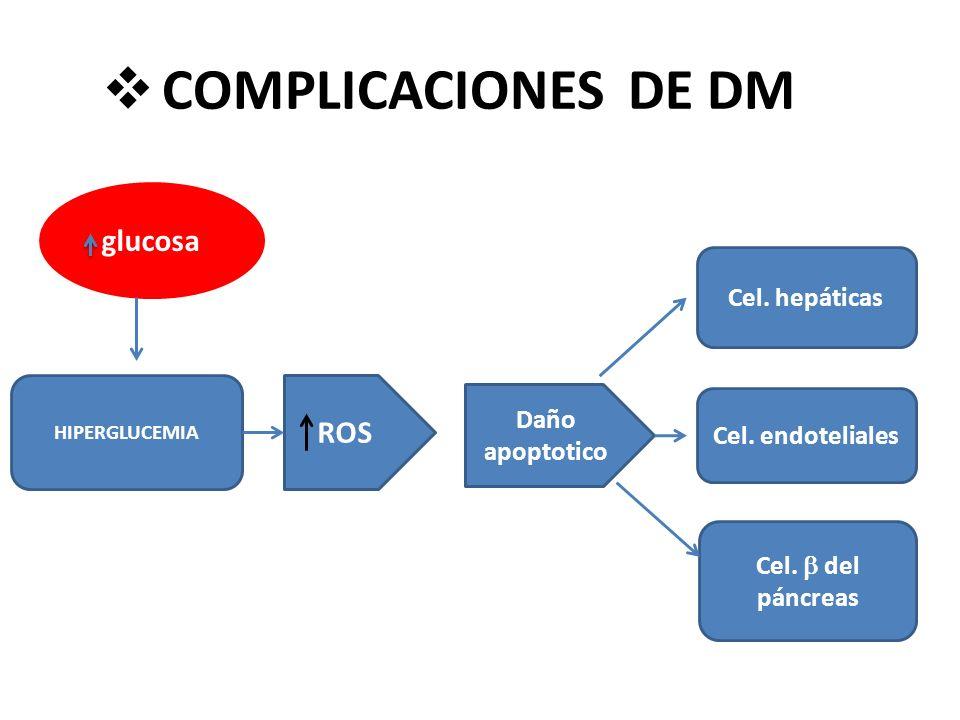 COMPLICACIONES DE DM glucosa HIPERGLUCEMIA ROS Cel. hepáticas Cel. endoteliales Cel. del páncreas Daño apoptotico