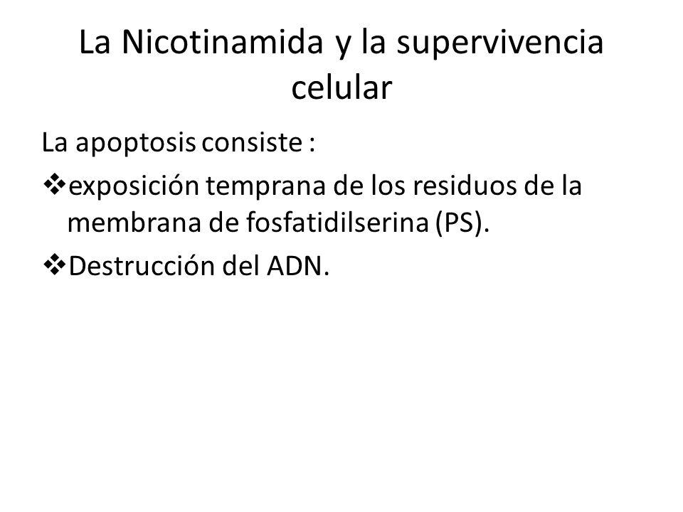 La Nicotinamida y la supervivencia celular La apoptosis consiste : exposición temprana de los residuos de la membrana de fosfatidilserina (PS). Destru