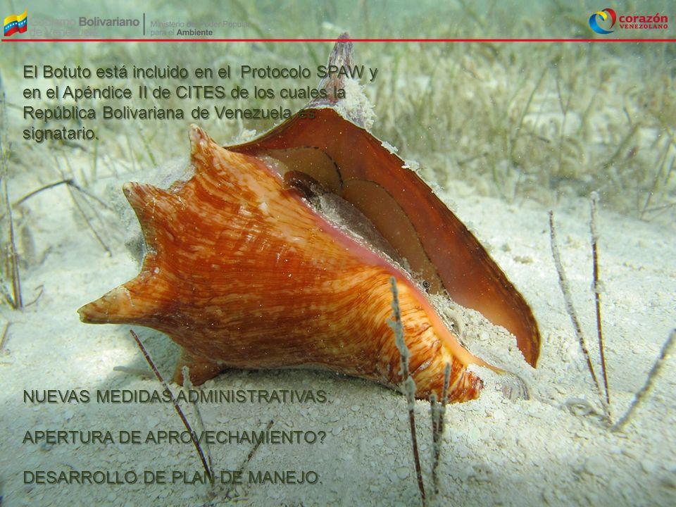El Botuto está incluido en el Protocolo SPAW y en el Apéndice II de CITES de los cuales la República Bolivariana de Venezuela es signatario. NUEVAS ME