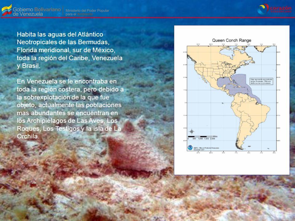 Habita las aguas del Atlántico Neotropicales de las Bermudas, Florida meridional, sur de México, toda la región del Caribe, Venezuela y Brasil. En Ven
