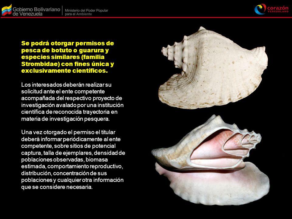 Se podrá otorgar permisos de pesca de botuto o guarura y especies similares (familia Strombidae) con fines única y exclusivamente científicos. Los int