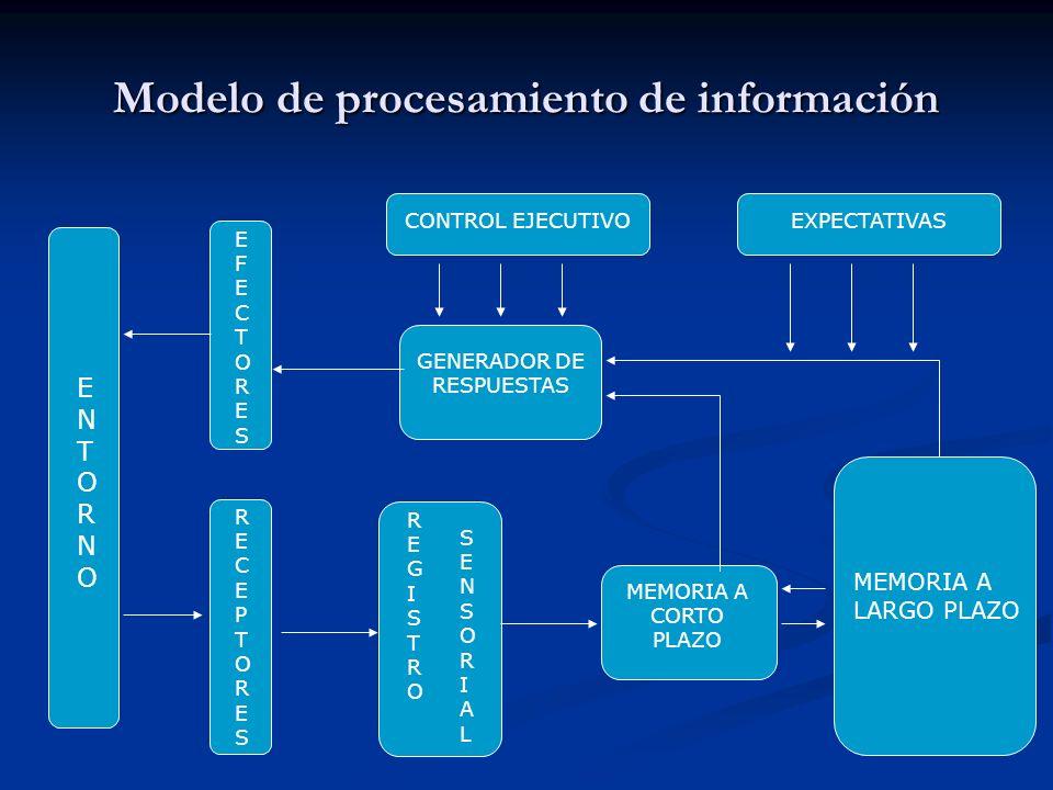 Modelo de procesamiento de información ENTORNOENTORNO EFECTORESEFECTORES RECEPTORESRECEPTORES GENERADOR DE RESPUESTAS REGISTROREGISTRO SENSORIALSENSOR