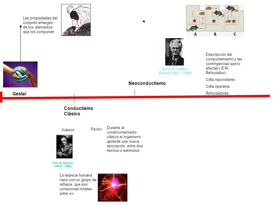 Gestal Las propiedades del conjunto emergen de los elementos que los componen Watson Conductismo Clásico La especie humana nace con un grupo de reflej