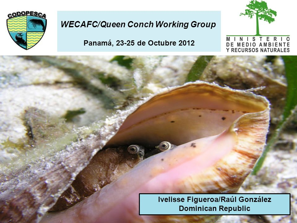 Ivelisse Figueroa/Raúl González Dominican Republic WECAFC/Queen Conch Working Group Panamá, 23-25 de Octubre 2012