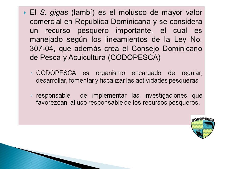 El S. gigas (lambí) es el molusco de mayor valor comercial en Republica Dominicana y se considera un recurso pesquero importante, el cual es manejado