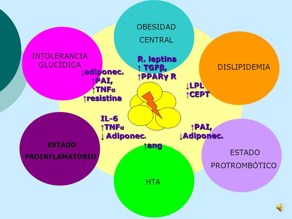 angiotensinógeno leptina adiponectina resistina PAI-1 TNF α IL-6 LPL CETP TGFβ Receptor PPARγ RESISTENCIA SEDENTARISMOHIPERALIMENTACIÓN EXPRESIÓN GENT