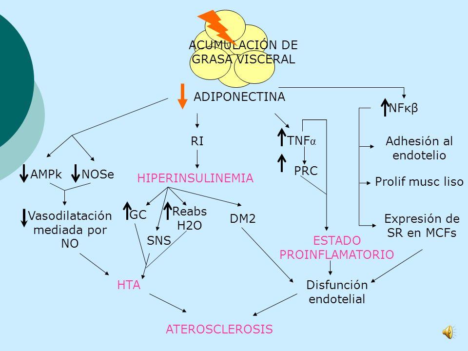 CATABOLISMO AGL Glucotoxicidad Lipotoxicidad RI glucotoxicidad Hiperinsulinemia compensadora Disfunción de célβ DM2 VLDL LPL CEPT LDL densas pequeñas
