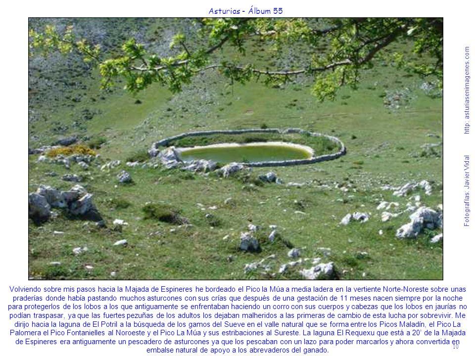 10 Asturias - Álbum 55 Fotografías: Javier Vidal http: asturiasenimagenes.com Volviendo sobre mis pasos hacia la Majada de Espineres he bordeado el Pi