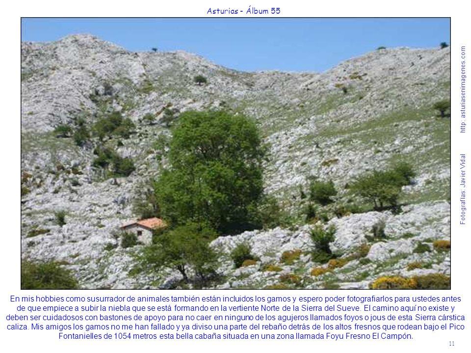 11 Asturias - Álbum 55 Fotografías: Javier Vidal http: asturiasenimagenes.com En mis hobbies como susurrador de animales también están incluidos los g