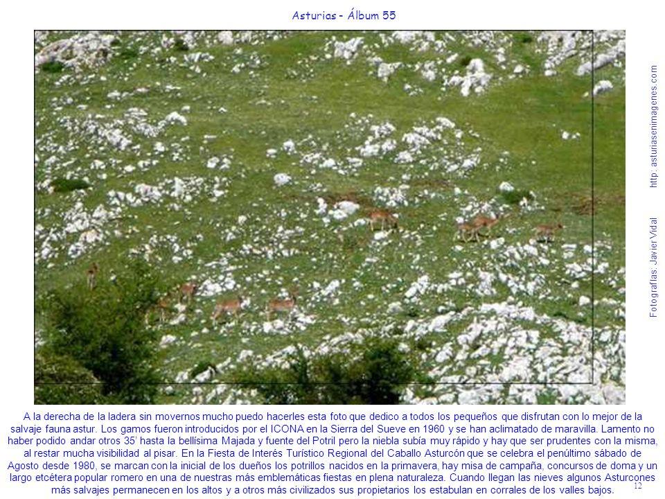 12 Asturias - Álbum 55 Fotografías: Javier Vidal http: asturiasenimagenes.com A la derecha de la ladera sin movernos mucho puedo hacerles esta foto qu