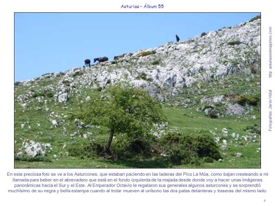 4 Asturias - Álbum 55 Fotografías: Javier Vidal http: asturiasenimagenes.com En esta preciosa foto se ve a los Asturcones, que estaban paciendo en las