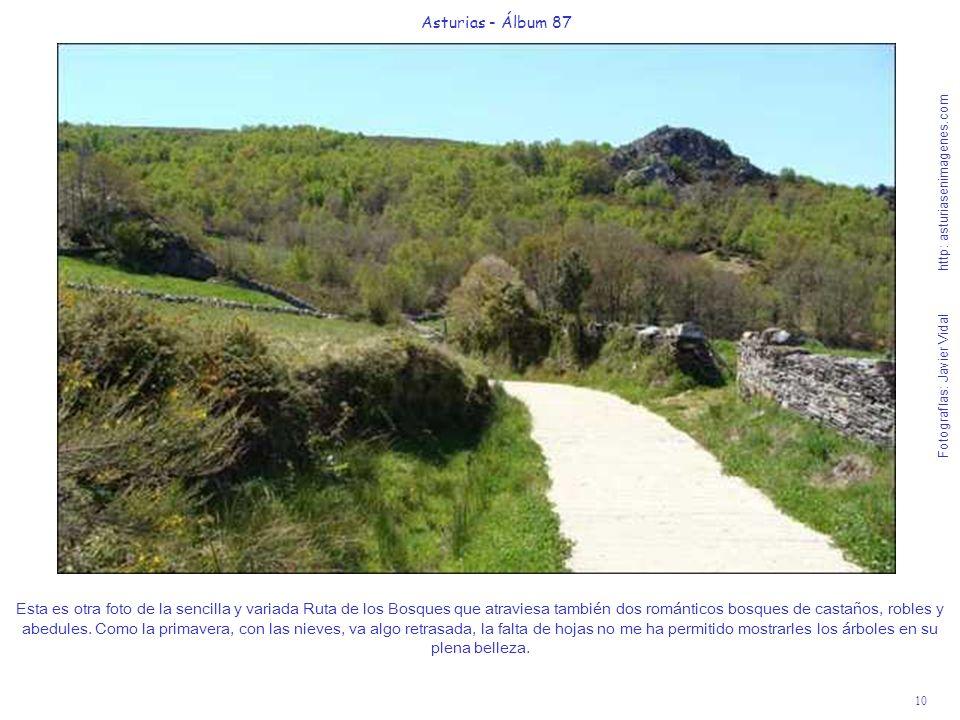 10 Asturias - Álbum 87 Fotografías: Javier Vidal http: asturiasenimagenes.com Esta es otra foto de la sencilla y variada Ruta de los Bosques que atrav